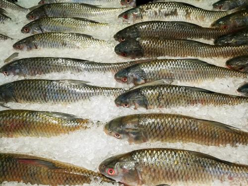 Fish from Andhra Pradesh, West Bengal banned in Patna