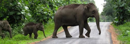 Elephants have first right on forest, says SC while ordering demolition of Numaligarh Refinery wall