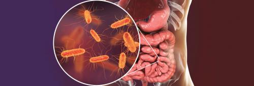 Lack of data on gut microbes in India a problem
