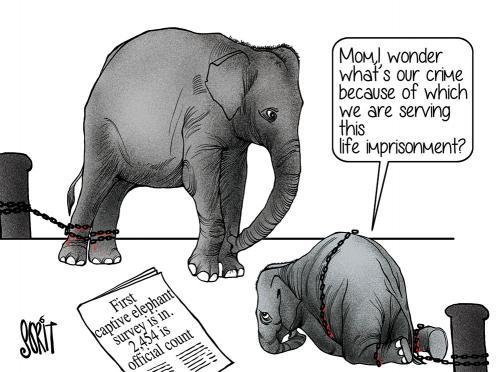 elephant corridors