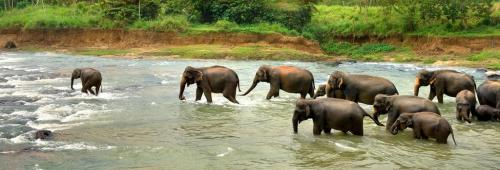 Numaligarh elephants' home restored: Deopahar notified as reserve forest after 20 years