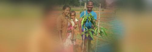 Jharkhand's success story of fruit plantation under MGNREGA