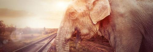 How to save India's elephants from killer rail tracks