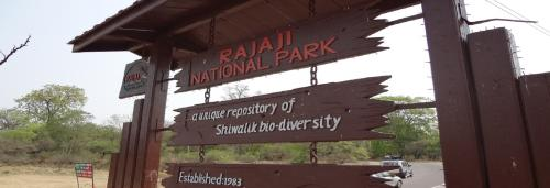 Rajaji Park director, forest officials named in poaching probe