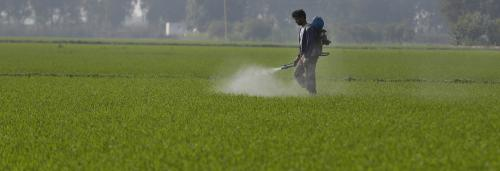 Report flags growing threat of monoculture in crop production
