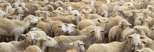 26% of local livestock breeds face the risk of extinction