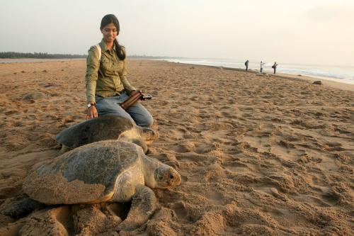 Indian shark researcher gets global recognition
