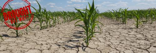 Drought, but why: Area under cultivation has halved in Andhra Pradesh's Ananthapuramu