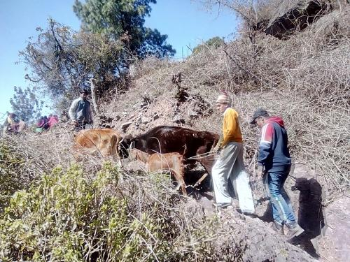 Dalit farmers in Kasauli march to common grazing land