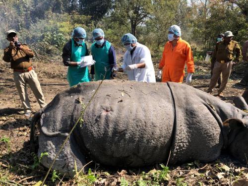 भीमसेन की मौत से गैंडा पुनर्वास योजना को झटका