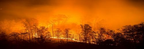 Forest fires in India tripled in the last four months