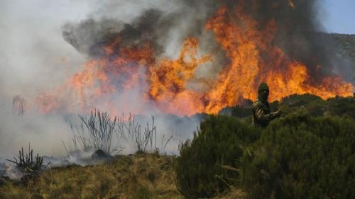 Why Mount Kenya is burning and what can be done to stop the fires
