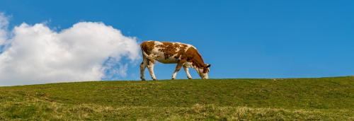 UN Environment Assembly: Livestock 'fart' is back in focus