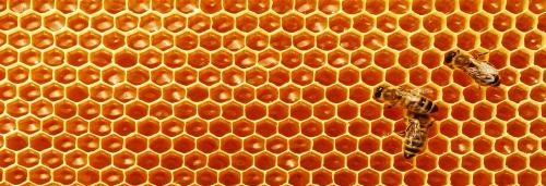 Honey as a biomarker for pollution