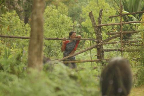 भारतीय वन अधिनियम का पहला संशोधन मसौदा तैयार