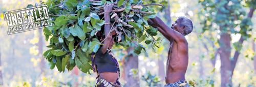 Forest Rights Act: Evicting the gaps