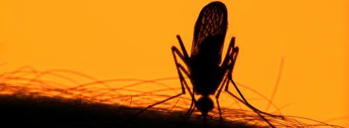 Zika virus: US relaxes travel warnings to India