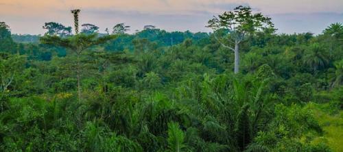 The logic of mass tree plantations
