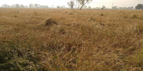 तेज आंधी व बारिश से आफत में है किसान, जानें क्या है इसका ग्लोबल कनेक्शन