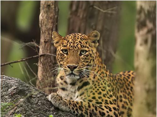 वन्य जीव संरक्षण में गैर-संरक्षित क्षेत्र भी हो सकते हैं मददगार