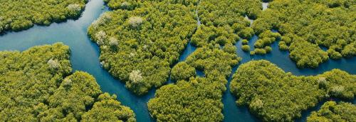 Scientific management of mangroves is need of the hour