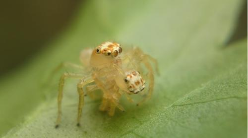 A peek into the secret lives of Indian spiders