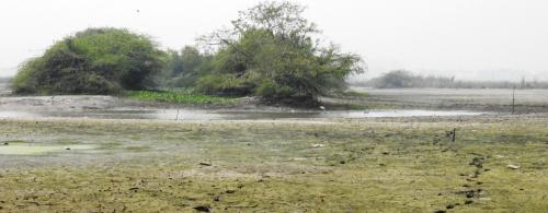 Barrage repairs at Okhla park force birds out in breeding season