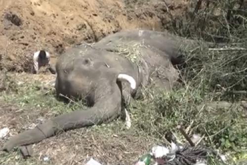 ट्रेन की टक्कर से 2 हाथियों की मौत, चार साल में मरे 62 हाथी