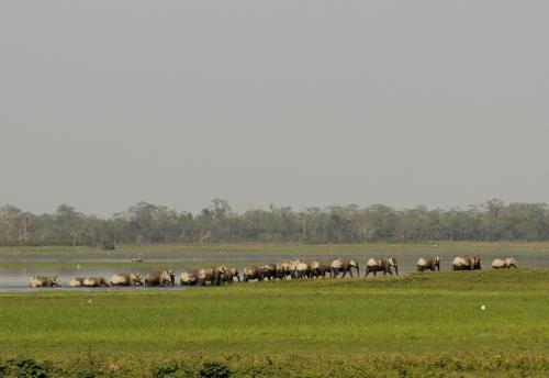 जारी है इंसान और हाथियों के बीच संघर्ष, ओडिशा में 5 लोगों की मौत