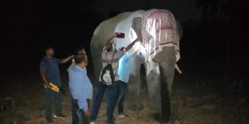 Talcher's killer elephant detusked