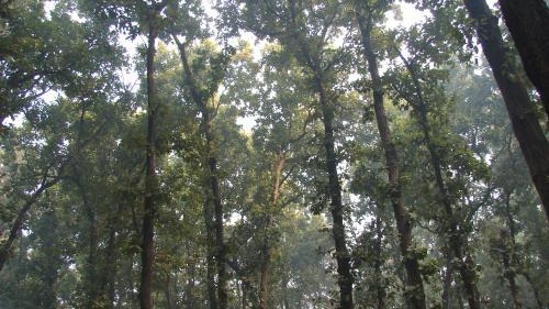 1.40 लाख देशी पेड़ लगाने का आदेश, दुविधा में फंसा वन विभाग