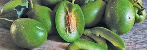 Indian olives: The most under-utilised fruit crop