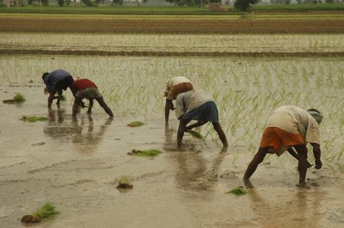 सुनारों की नहीं, किसानों की है अक्षय तृतीया