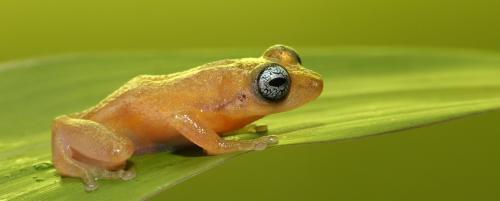 'Frogs are beautiful'