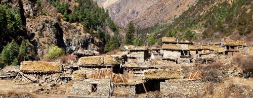 Community leadership reduces deforestation, poverty: Nepal study