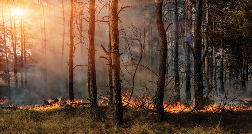 Six-fold increase in forest fires as temperatures rise in many states