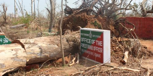 Cyclone Fani damages Odisha's seaside Balukhanda Sanctuary