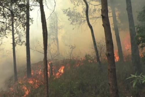 उत्तराखंड में आग का तेजी से बढ़ता दायरा