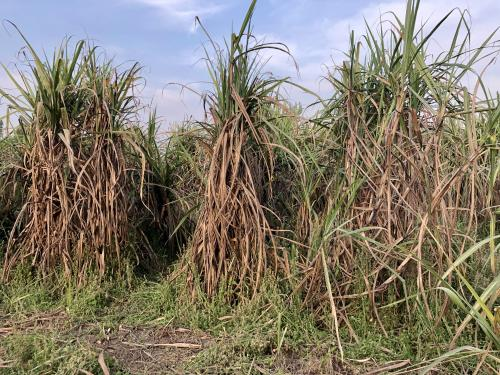 'The sugar sector is highly politicised'
