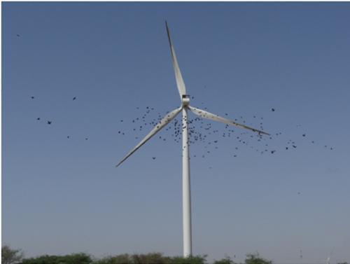 Windturbines posing a threat to birds: study