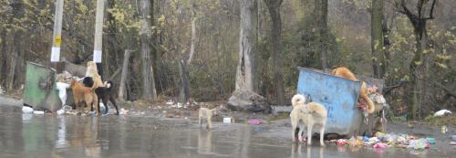 Dog bites decrease in Srinagar but the fear remains