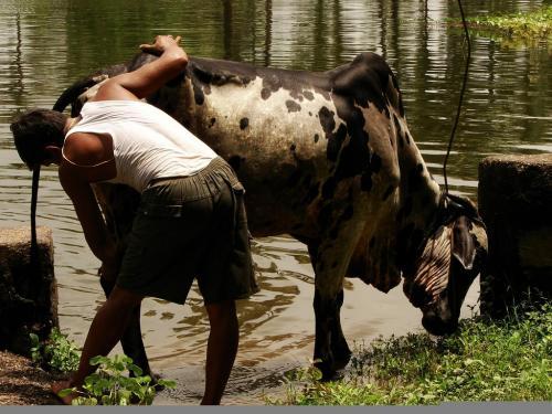 कृषि संपन्न क्षेत्रों में बढ़ रही है ग्रामीण युवाओं की आबादी, लेकिन …