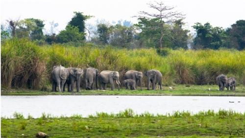 Photographic identities may help in elephant census: Study