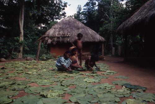 जंगलों पर नियंत्रण के लिए सरकार व वनवासियों के बीच जारी है संघर्ष