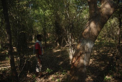 सफेद हाथी बन गया है वन विकास निगम, जंगल तो खत्म होंगे ही...
