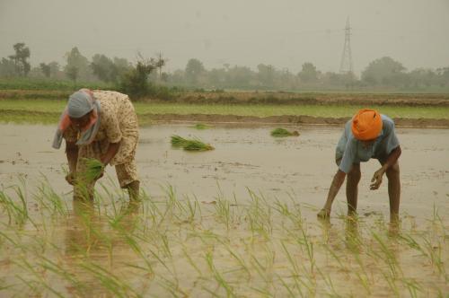 आर्थिक सर्वे : किसानों ने कम किया उपभोग तो नीचे बैठ गई विकास दर