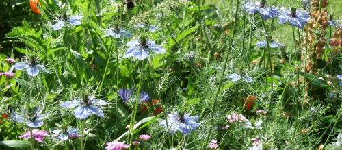 Global Eco Watch: Major ecological happenings of the week (July 1 – July 7)