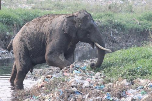 कार्बेट टाइगर रिजर्व में प्लास्टिक कचरा, कैसे होगा समाधान