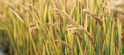 Remote sensing can resolve food crisis