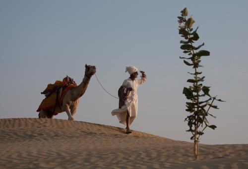 भारत की 30 फीसदी जमीन का मरुस्थलीकरण